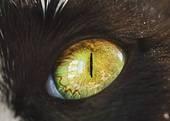 Poezen oog Stock Foto Beelden 17.029 poezen oog afbeeldingen en foto's beschikbaar om te downloaden van meer dan 100 stock fotografie leveranciers.
