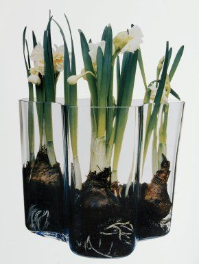 Savoy Vase Alvar Aalto (Finnish designer, 1898-1976) Finland 1936 (creation) Looks so cool with these planted bulbs