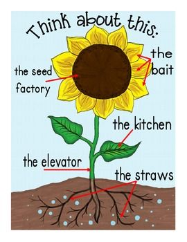 PLANTS BUNDLE: LIFE CYCLES, GRAPHIC ORGANIZERS, POSTERS AND MORE - TeachersPayTeachers.com