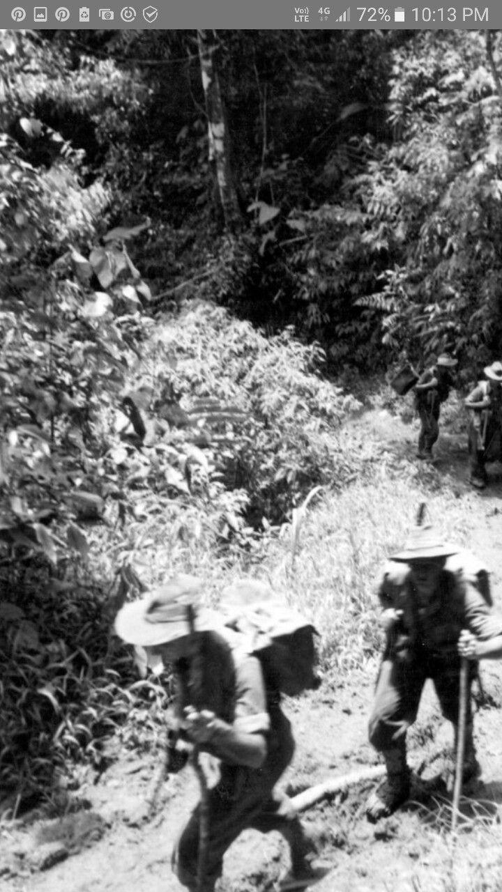 New guinea. Shaggy ridge. Soldiers  walking the trek from kumbarum  to the pimple