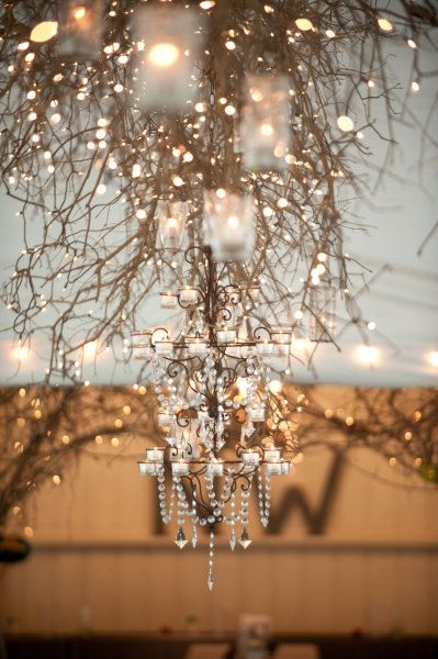 beautiful lights strung around branches and twigs