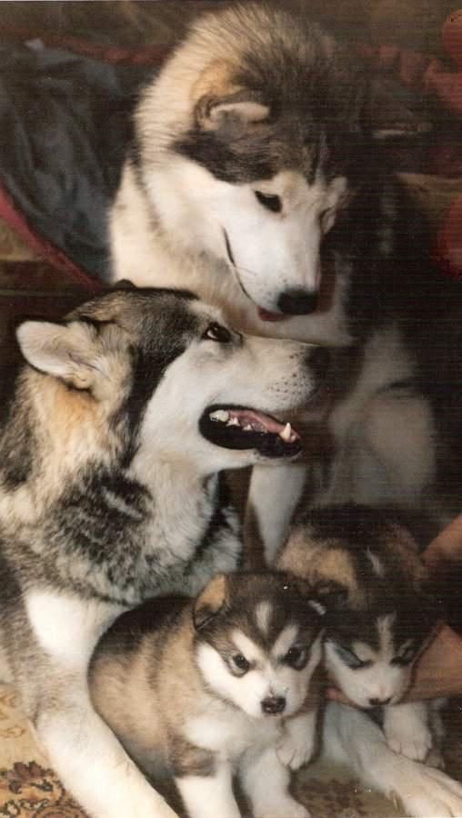 Best Dog Beds For Alaskan Malamutes