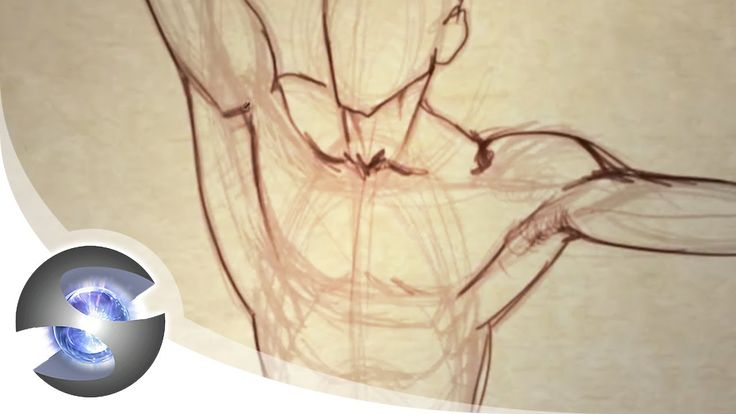 How to Draw the Male Torso from the Front