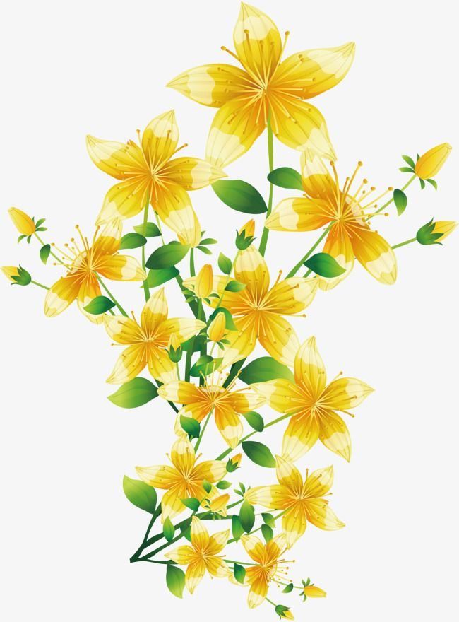 Yellow Flowers Vector Flowers Yellow Flowers Spring Plants