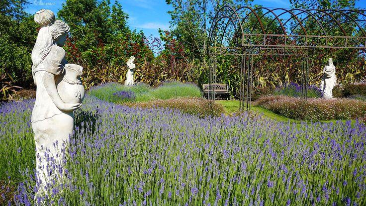 ✣ Glebe gardens – Launceston, Tasmania ✣  Photograph © Ellen Vaman www.facebook.com/ellen.vaman1 #EllenVaman #Photography #Tasmania #Gardens #Flowers #Beauty #Nature #Earth #World #NaturePhotography