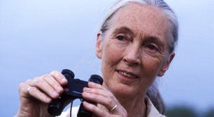 "Dr. Jane Goodall...Chimps' BEST (Human) Friend.  Her amazing connection to Chimps express LOVE & COMPASSION Non-Verbally through BODY Language!  ""From Head-to-Toes, the BODY Always Shows...the TRUTH!!"""
