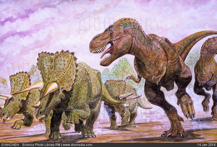Tyrannosaurus rex hunting, artwork - stock photo