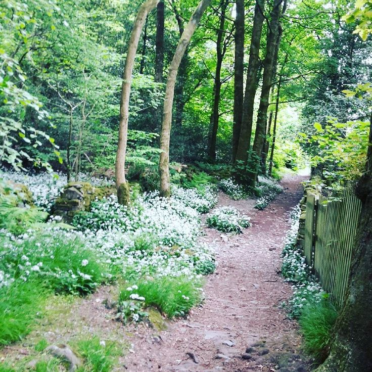 #wildgarlic #hiking #lakedistrict by caro11a
