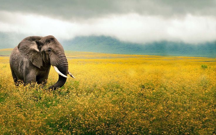 Latest HD Elephants Wallpapers and Photos | HD Animals Wallpapers 6