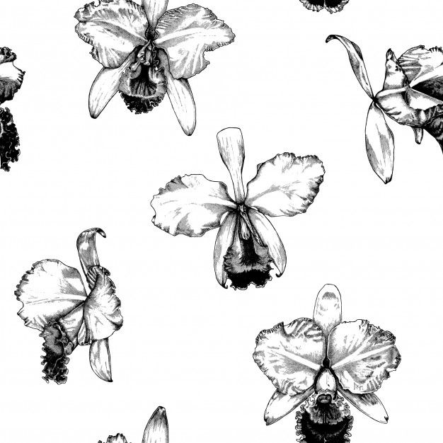 Hand Drawn Cattleya Orchid Flower Pattern Background In 2020 Cattleya Orchid Orchid Drawing Orchid Illustration