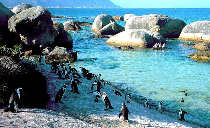 Swim with Penguins: A day at the beach takes on a whole new meaning when you're hanging with 3,000 African penguins at Boulders Beach. While the views (and penguin photo ops) are great from the wooden boardwalk at Foxy Beach, we recommend taking a swim with the amusing creatures, who playfully dart in and out of the warm ocean water.