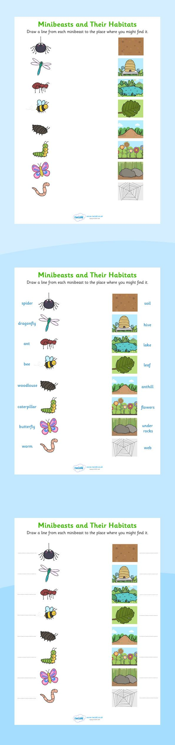 * Habitats- Minibeasts and their habitats worksheets