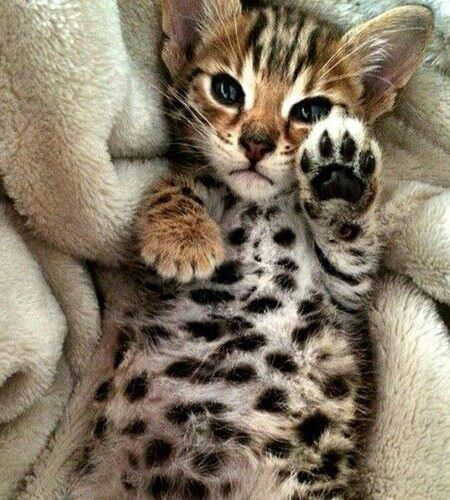 Adorable spotted little belly!