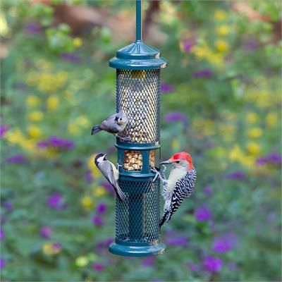 small how feeder articles to istock keep out squirrels feeders bird of