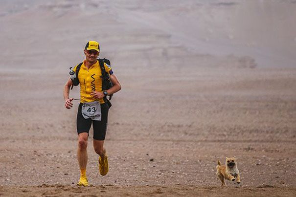Gobi, un perro callejero de China encontró a su humano en la carrera de 250 kms Deserts Gobi March, una maratón extenuante que se llevó a cabo en el mayor desierto de China el pasado Junio. El perro saltó a la carrera para ganarse el corazón de Dion Leonard, un atleta muy competitivo procedente de Escocia quien lo adoptó