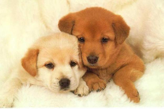perritos bebes tiernos - Buscar con Google