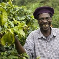 Climate change has wiped out nearly half of the 10 million coffee trees the members of the Mzuzu Coffee Planters Cooperative Union in the north of Malawi have planted since 2003.