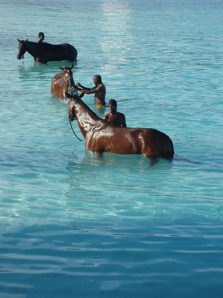 Horses in Barbados - Every morning, horses are brought by their handlers from the nearby racetrack to the sea at Carlisle Bay to be washed. Some of the them are given a swim as well.