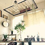 男部屋/観葉植物/リノベーション/中古住宅/古材/JSF研究会…などに関連する他の写真