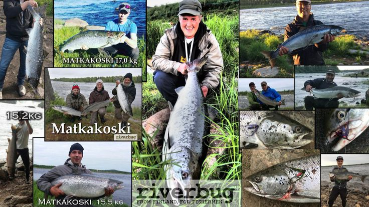 Crazy salmon summer with #riverbug tube flies :) #salmon #fly tying #tube fly www.riverbug.fi