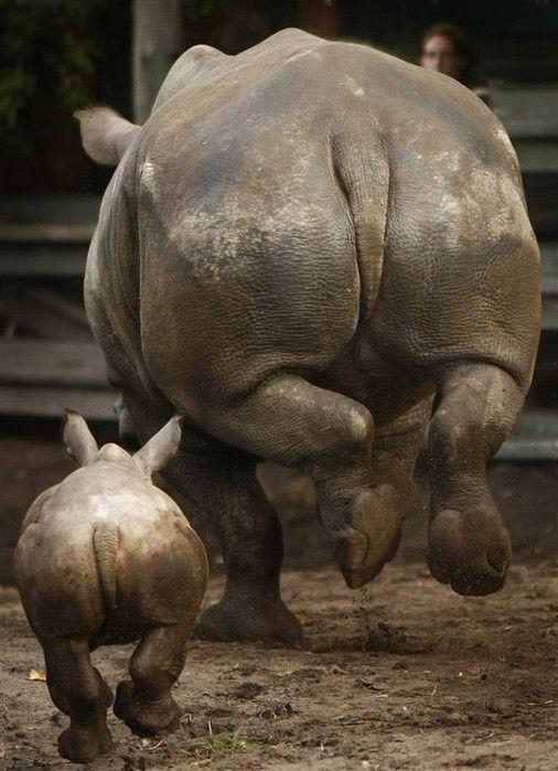 Rhino mama and baby haulin' butt... literally