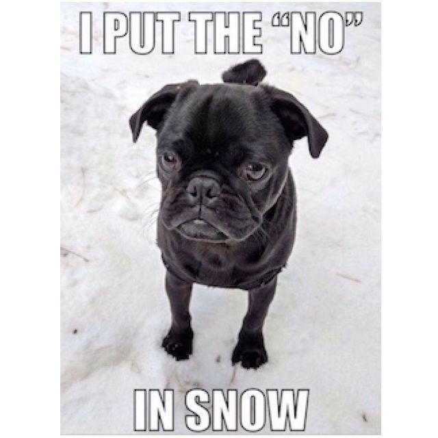 Pugs Pug Puglife Snow Funny Meme Meme Pug Meme Funny Pug Blackpug