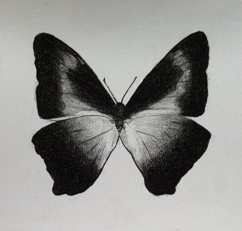 Butterfly (black chalk) Gallery Nyman represents art by the Danish artist Cecilie Nyman. Black chalk drawings, paintings, ink and watercolor.