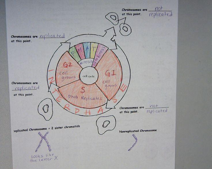1036 best Biology Content images on Pinterest