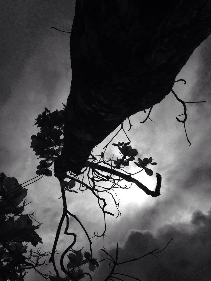 Naturaleza, árbol, tree, clouds