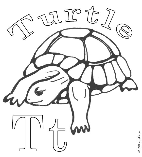 19 best T is for Turtle images on Pinterest Box turtles