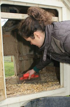 Cleaning out the chicken house and run | Keeping Chickens: A Beginners Guide