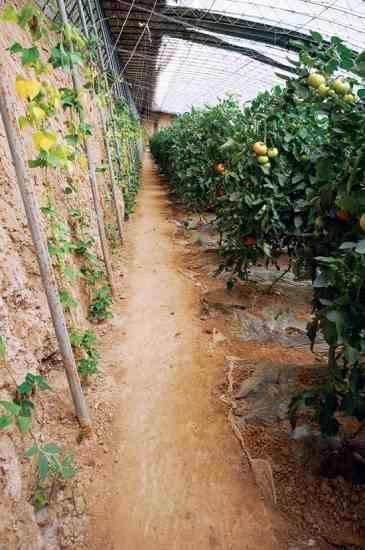 chinese greenhouses for winter gardening organic gardening solar rh pinterest com