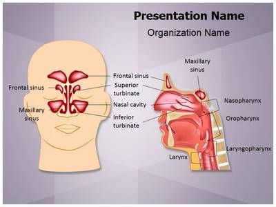 30 best editable powerpoint presentation templates images on check out our professionally designed and world class nose anatomy ppt template toneelgroepblik Choice Image