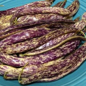 Dragon Tongue bush bean. Easy to grow, big producer, tasty.