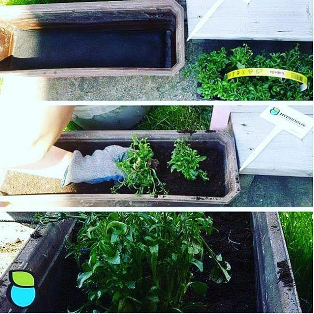 Sadzenie kwiatów w długiej doniczce, na długim Hydroboxie. #hydrobox #hydroboxpl #kwiaty #ziola #herbs #sadzenie #watering #nawadnianie #flowerpot #doniczka #ogrod #ideas #diy
