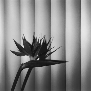 Robert Mapplethorpe - XYZ curated by Peter Marino 7 rue Debelleyme Paris, 75003, France Thursday, January 28, 2016–Saturday, March 5, 2016