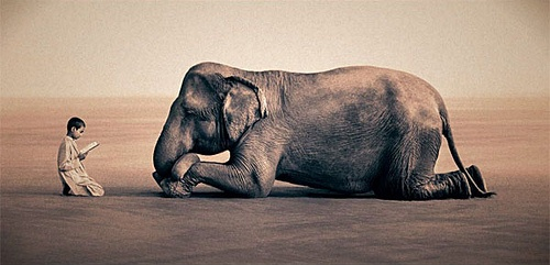 I am in love with this photo. Elephants are amazingly majestic animals. Photo by Gregory Colbert.
