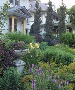 85 best images about narrow columnar trees shrubs on for Slender trees for small spaces