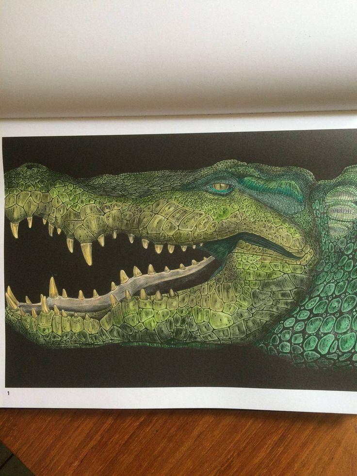 Alligator By Marianne Oonincx