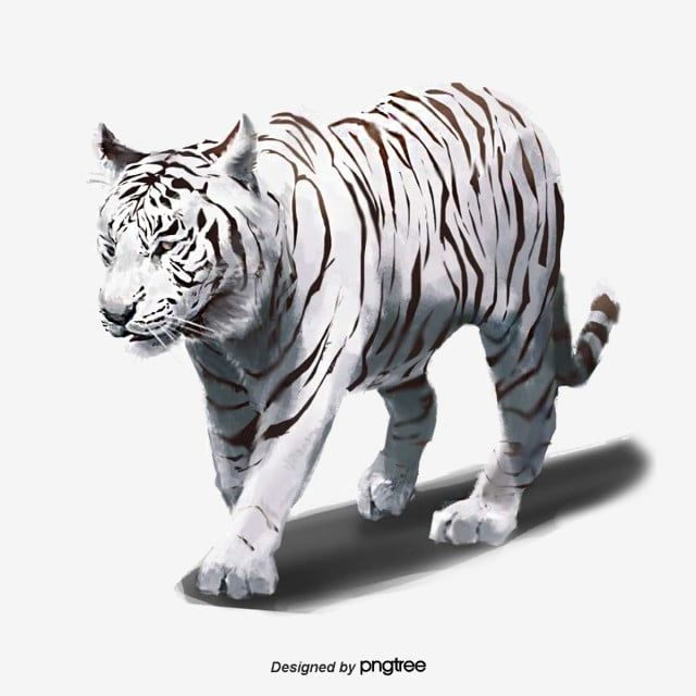 Hand Painted White Tiger Beast Elements Ferocious Animal White Tiger Png Transparent Clipart Image And Psd File For Free Download White Tiger White Painting Tiger