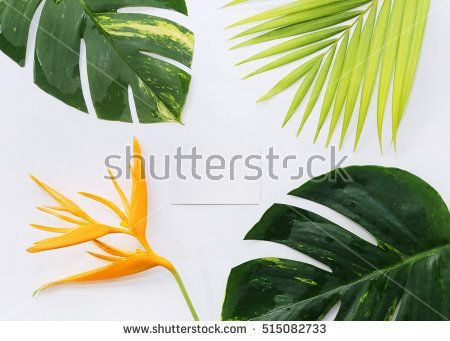 tropical plants with card on white background