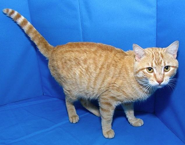 Springfield Cat Adoption