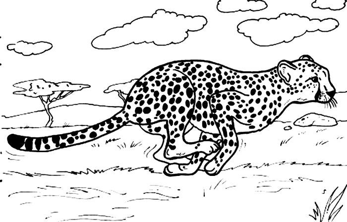 Coloring Pages Cheetah Pdf In 2020 Animal Coloring Pages Zoo Animal Coloring Pages Coloring Pages For Girls