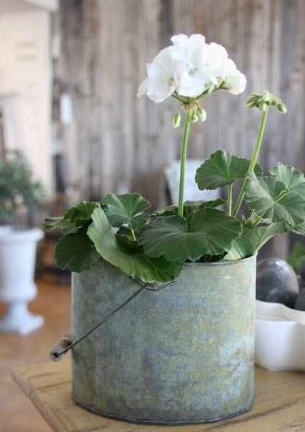 http://gr.pinterest.com/ioannavana/geraniums/