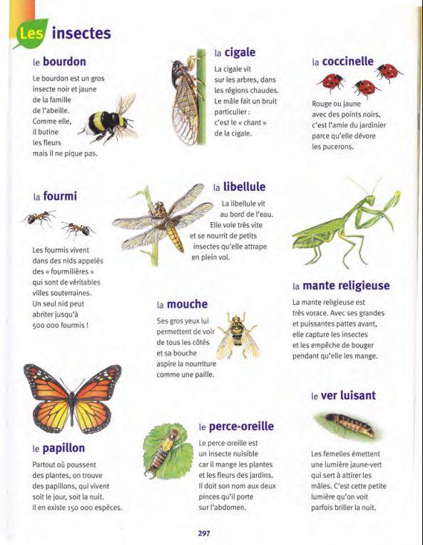 Insectes / Larousse des Maternelles