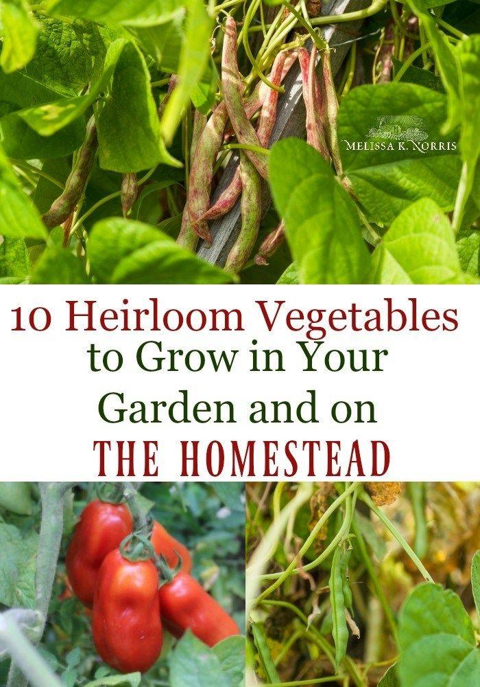 10 Unique Heirloom Vegetables To Grow In Your Home Garden
