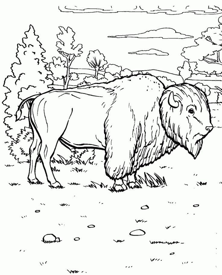 Kolorowanka bison