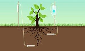 Economia de água na irrigação beneficia produtores de hortaliças