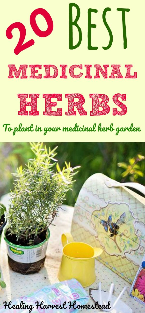 Having an herb garden filled with medicinal plants is a good idea if you want to be prepared. But what plants and herbs should you plant in your medicinal herb garden? If you are planning on planting an herbal medicine garden this Spring, here are the BEST 20 Medicinal Herbs to choose to get your garden prepared for emergencies.