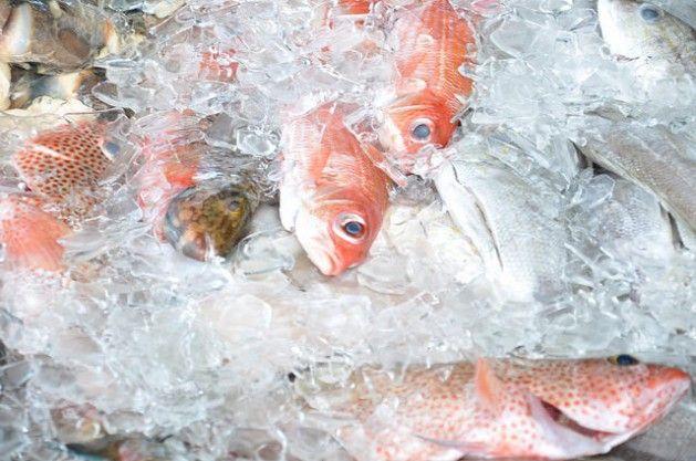 A acidificação oceânica causa tormentas aos países pesqueiros - http://controversia.com.br/350